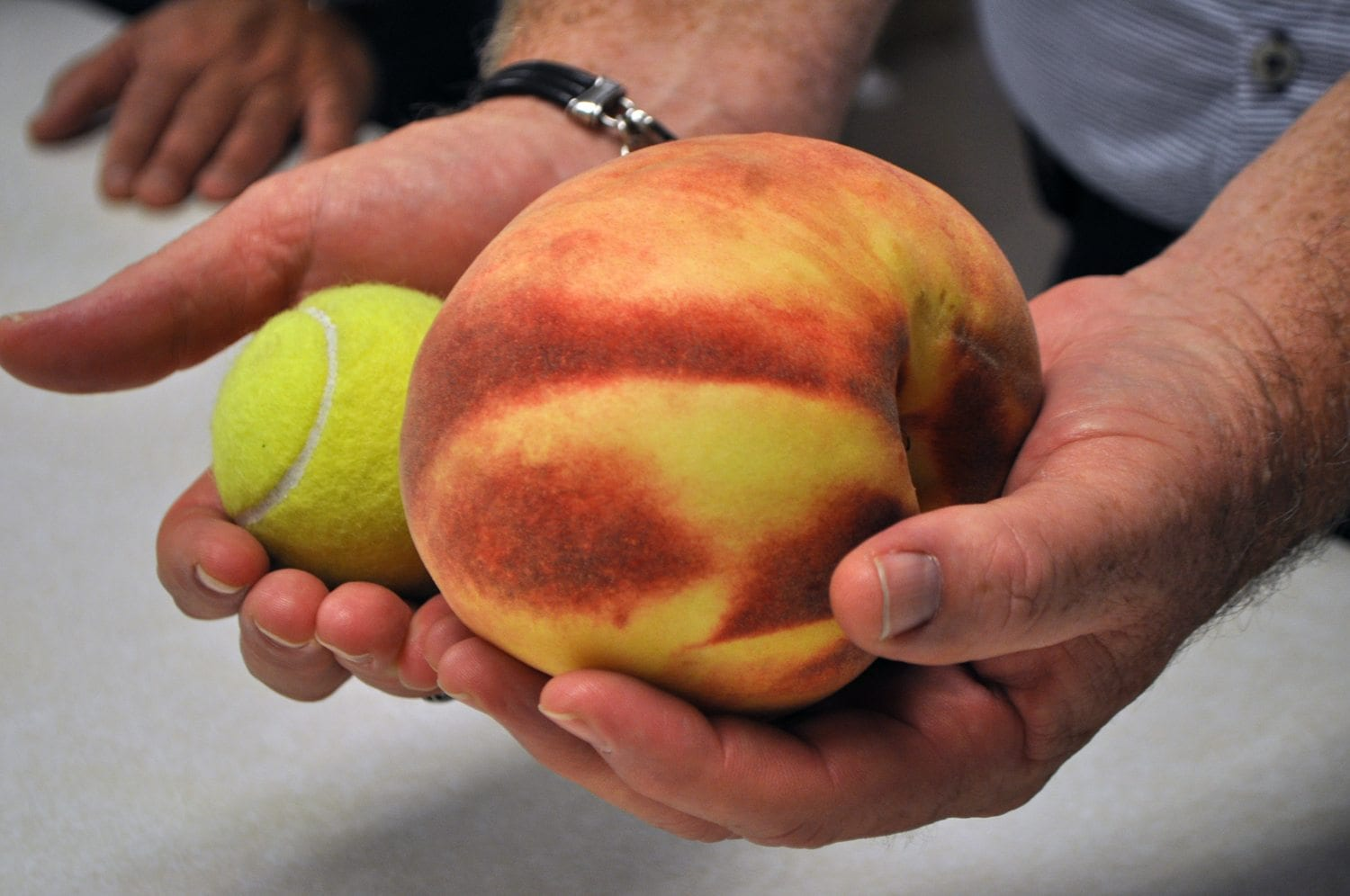 Johnson County peach may break Guinness World Record