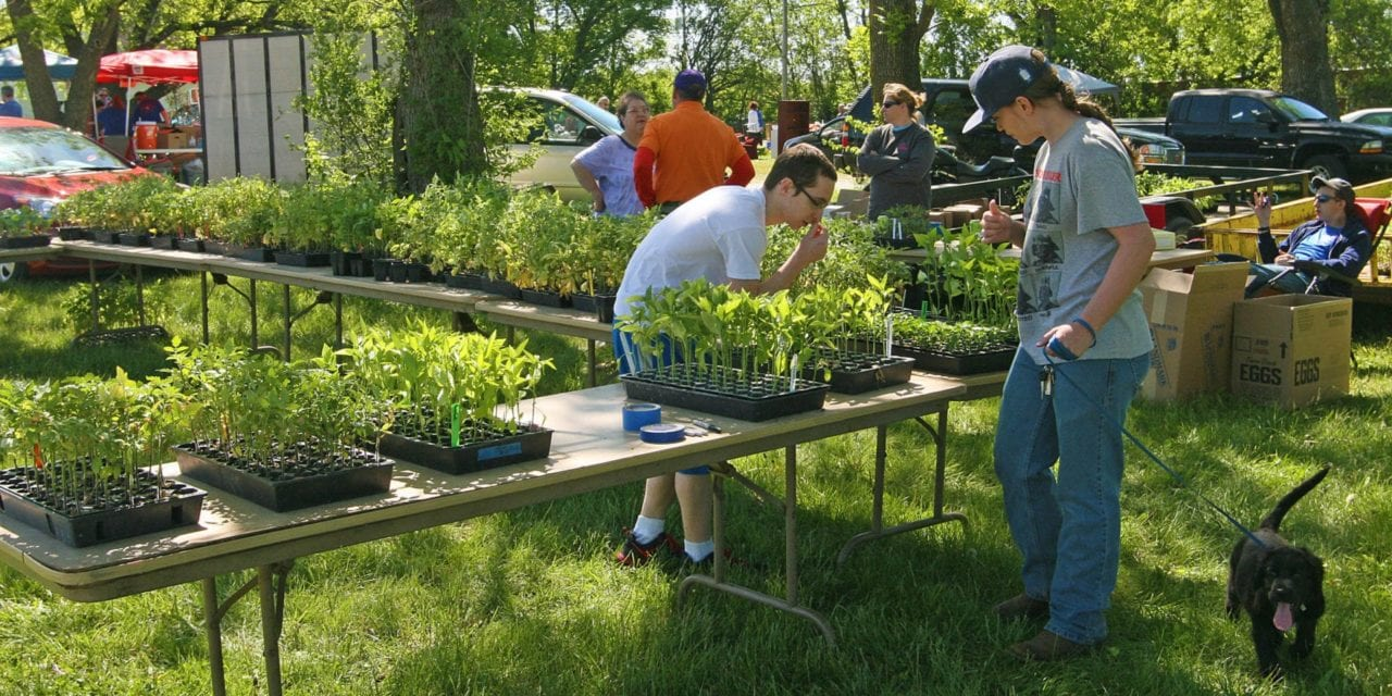 Local community garden springs into life