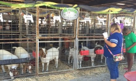 Johnson County Fair photos