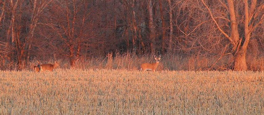 Firearm deer season opens this week, runs thru Dec. 10