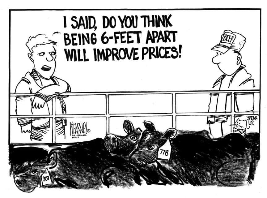 Meat prices spike, cattle prices fall