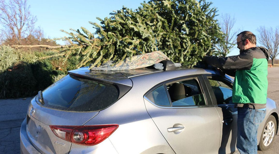 Christmas tree recycling begins Dec. 26