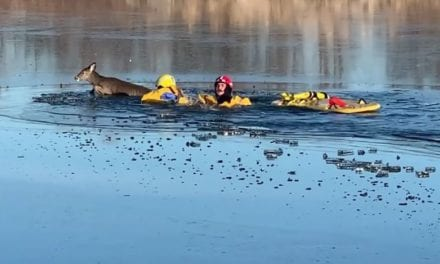 Deer rescued from frozen pond